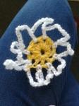 daisy photo 1