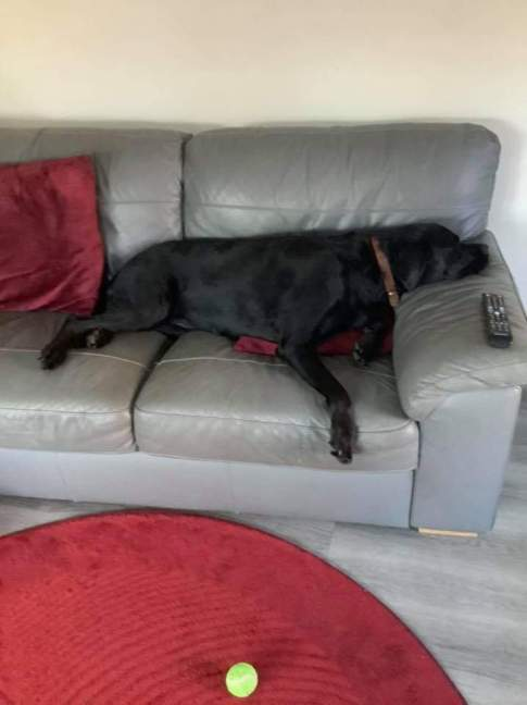 Millie the dog