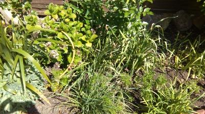 before weeding
