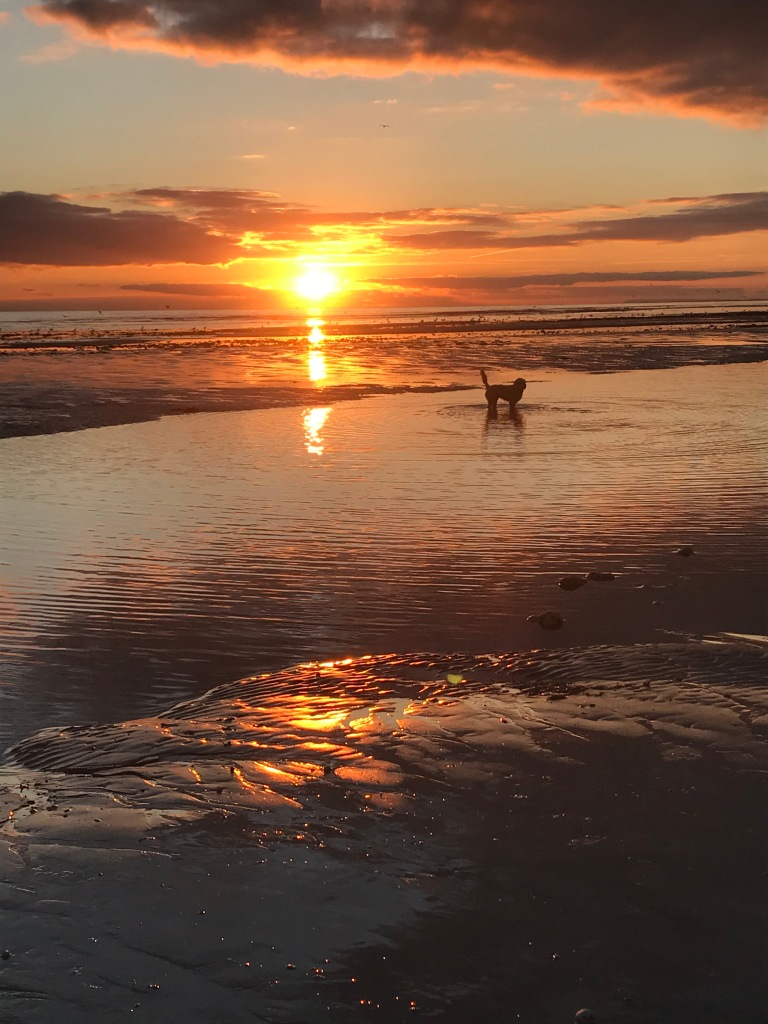 """this photo is taken at West beach and features my dog, Oaty.  Two of my favourite things which is why the photo makes me happy"""""""
